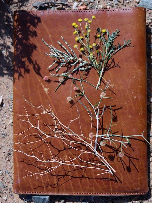 Fotobanka sbezplatnými fotkami na tému arídny, botanika, bylinka, dedinský