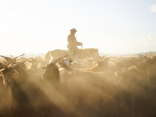 Side view of professional Mongolian herdsman in traditional cloth and hat riding horse with rope in hand while grazing goats in prairie under blue sky with dust clouds in back lit