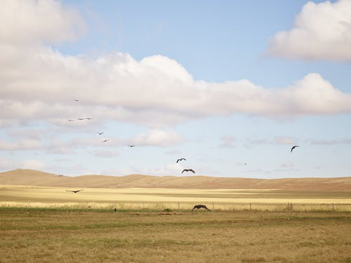 Birds flying over remote empty prairie