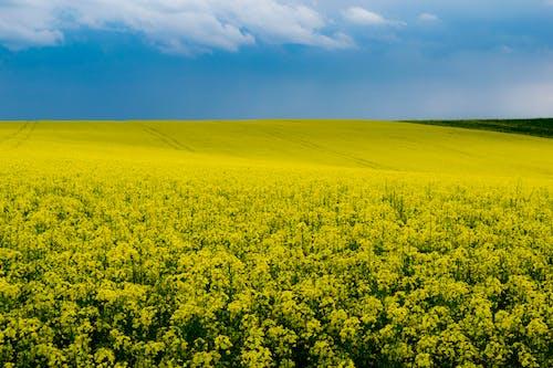 土, 土壤, 增長, 夏天 的 免費圖庫相片