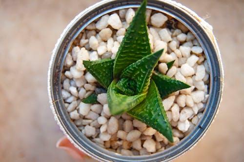 仙人掌, 仙人掌植物, 在家 的 免費圖庫相片