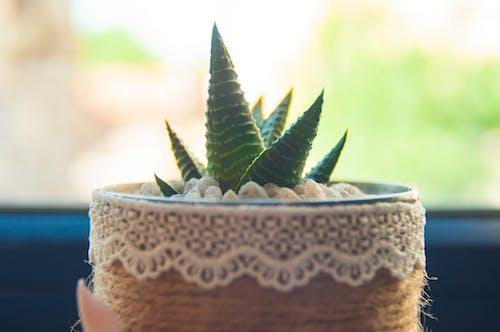 仙人掌, 仙人掌植物, 仙人掌花 的 免費圖庫相片