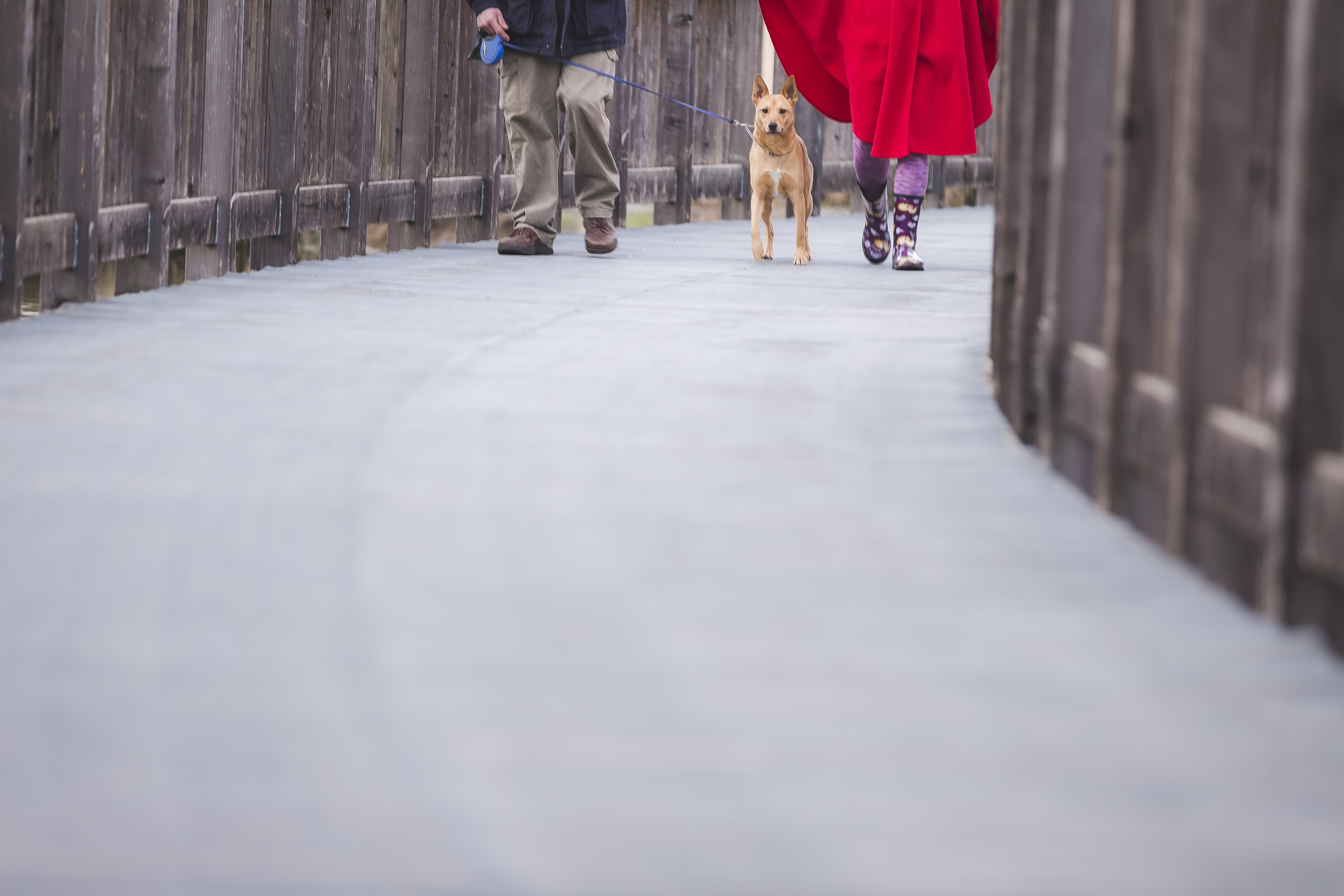 Person Walking With His Dog