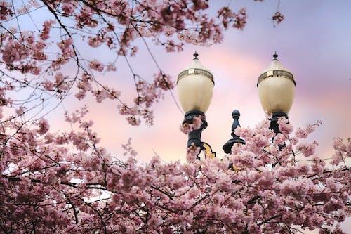 Základová fotografie zdarma na téma flóra, jarní čas, kvést, květ