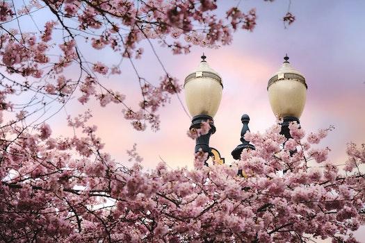 Free stock photo of flowers, spring, tree, bloom