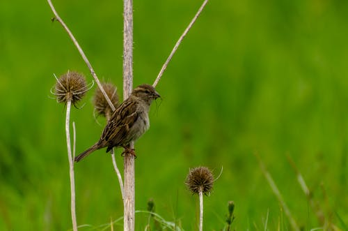 Free stock photo of grass, green, sparrow