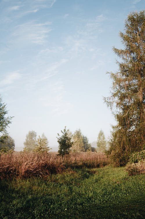 Trees growing on green meadow in countryside