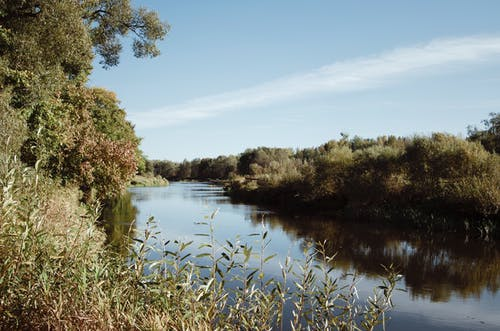 Calm river flowing through green trees