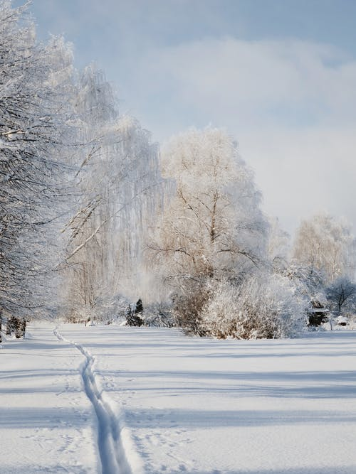 Snowy walkway in park against amazing winter scenery