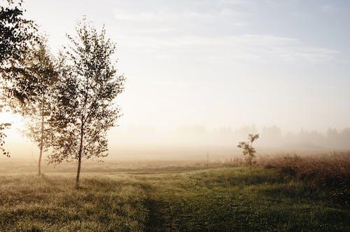 Beautiful scenery of foggy sunrise in countryside