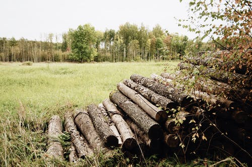 Timber logs stacked up in pile on grassy field against colorful trees and cloudy sky on autumn nasty day in countryside