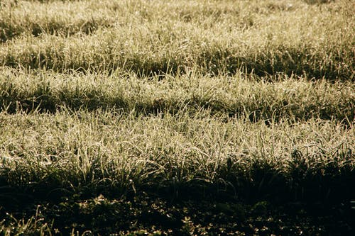 Fresh morning dew drops covering dry grass on meadow on sunny autumn day