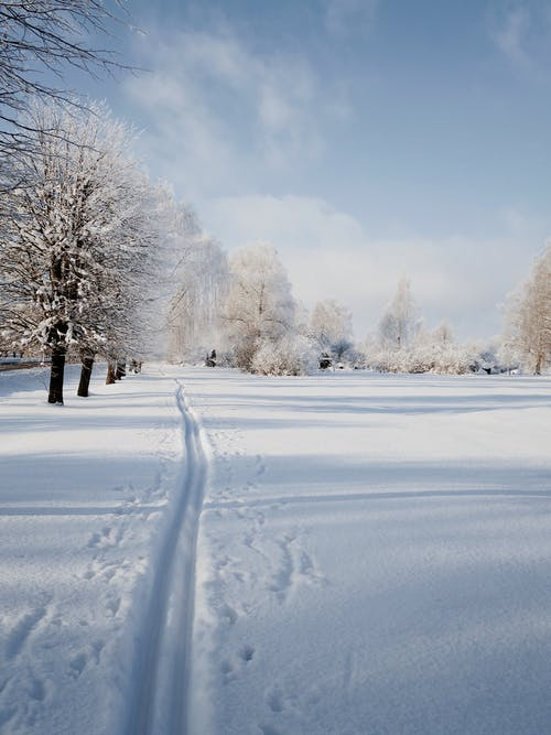 Picturesque winter scenery of snowy path in forest on sunny day