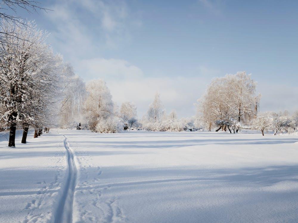 Ski tracks on snow on sunny winter day