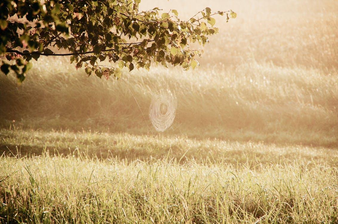 Cobweb on tree branch against grassland background in autumn sunrise