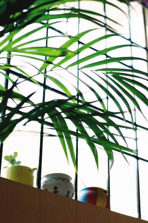 Green Plant Beside Window