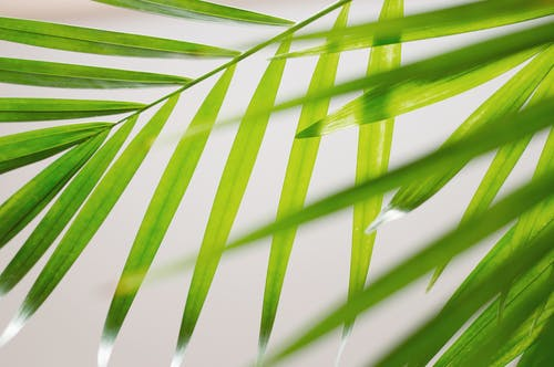 Green Palm Leaf in Close Up Photography