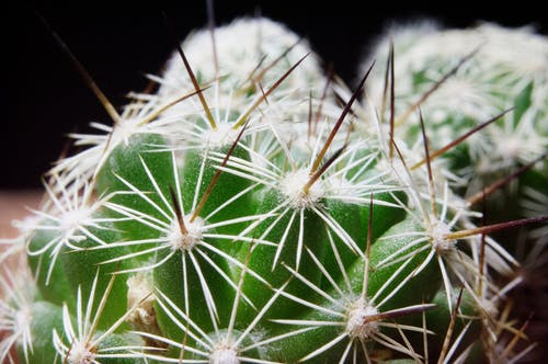 Cactus  in Close Up Photography