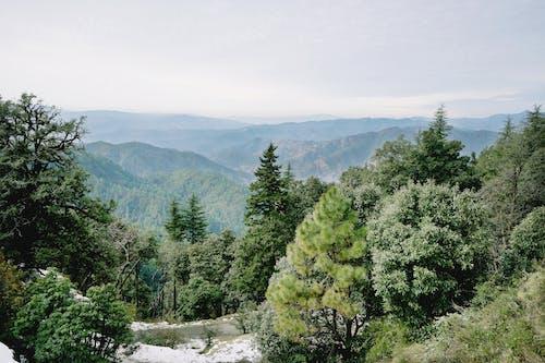 Gratis stockfoto met barbaars, berg, blad, boom