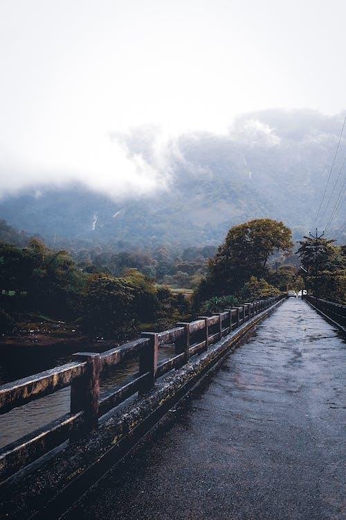 Free stock photo of bridge, nature, people travel