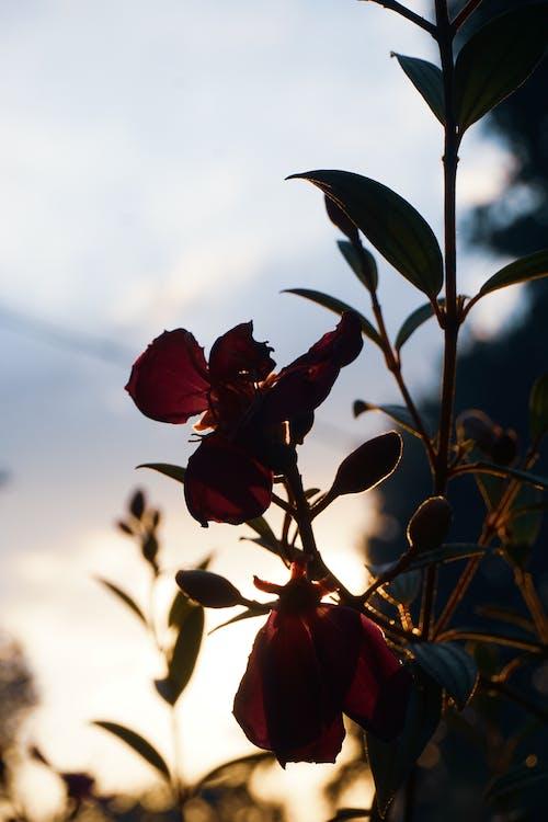 Free stock photo of beautiful flower, nature, sunset
