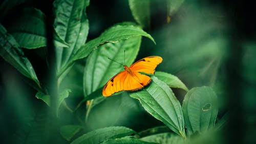 From above bright orange butterfly sitting on green leaf of plant on summer day in garden