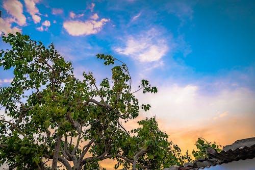 Fotos de stock gratuitas de cielo, cielo azul, cielo de la ciudad, cielo hermoso