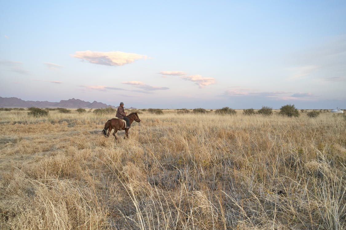 Anonymous male in warm clothes riding horse in wide field in daytime in summer