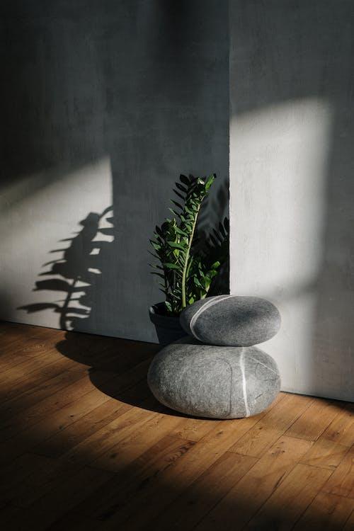 Gratis stockfoto met beton, bladeren, bloem