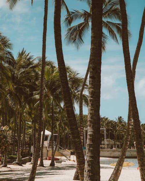 ada, ağaç gövdeleri, avuç içi içeren Ücretsiz stok fotoğraf