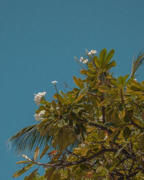 Blossoming Flowers of a Shrub