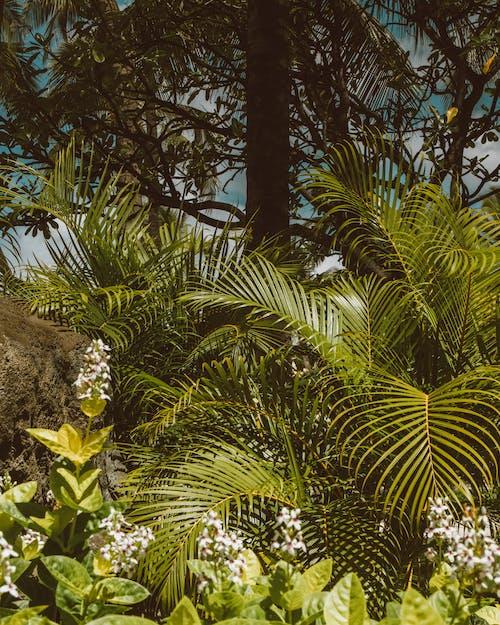 垂直拍攝, 增長, 戶外 的 免費圖庫相片