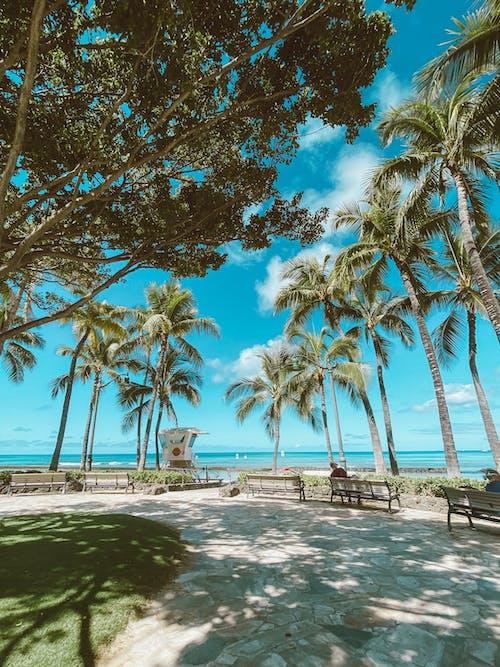 Green Palm Trees on Beach