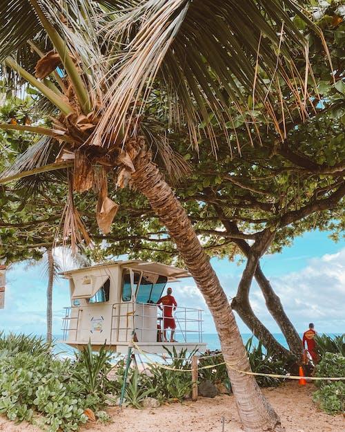 Základová fotografie zdarma na téma kokosová palma, letovisko, muži