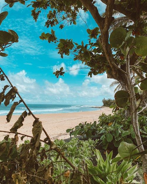 Foto profissional grátis de à beira-mar, ao ar livre, areia