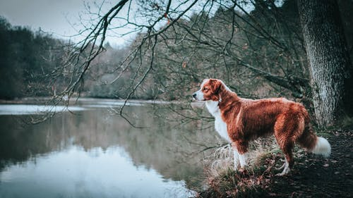 Charming contemplative dog admiring lake in park