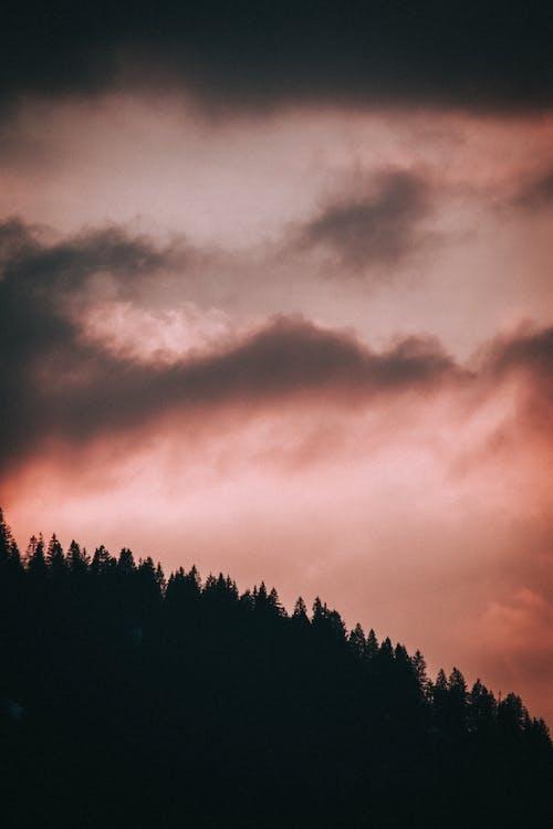 Foto profissional grátis de ângulo baixo, ao ar livre, árvore, atmosfera
