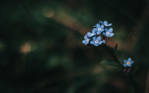 From above of colorful blue blossoming flowers with delicate rounded petals and green leaves growing in park on blurred background