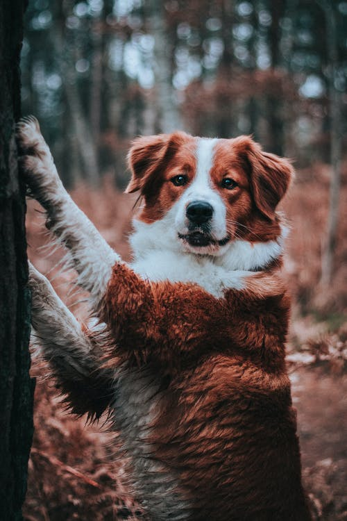 Funny hunting dog touching tree trunk with paws