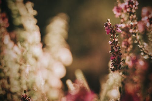 Blooming pink flowers with small buds growing on thin stalks in park in daylight on blurred background