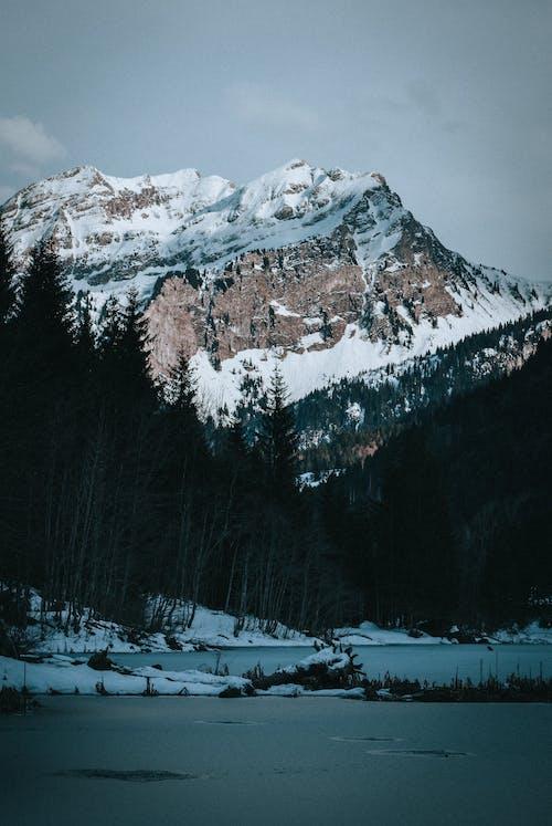 Snowy mounts near coniferous trees in winter