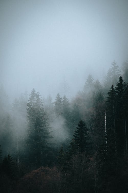Trees in mist under sky in forest