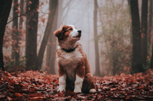 Dreamy dog resting on colorful autumn leaves in forest