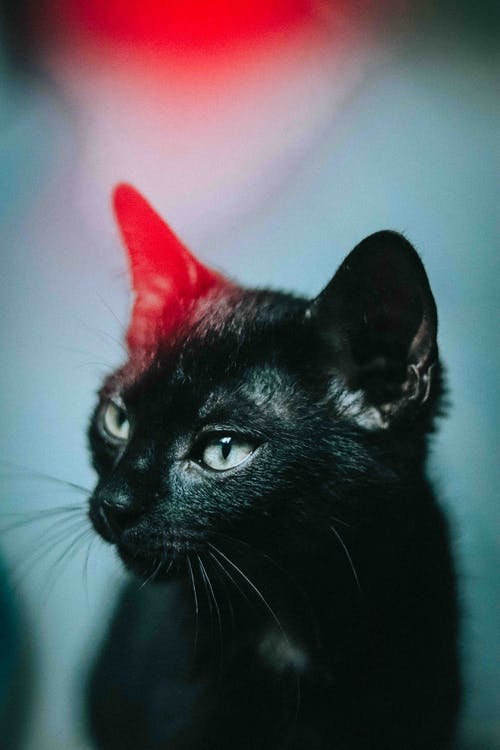 Graceful black cat in house illuminated by bright light