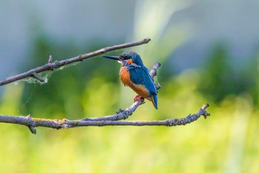 Free stock photo of nature, bird, animal, park