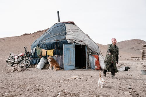 Foto stok gratis adat istiadat, alam, anak kucing, anjing