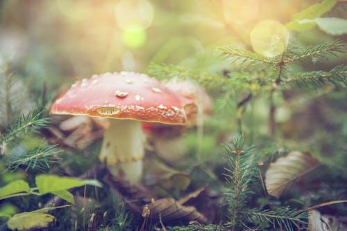 Бесплатное стоковое фото с Боровик, гриб, дикий, дневной свет