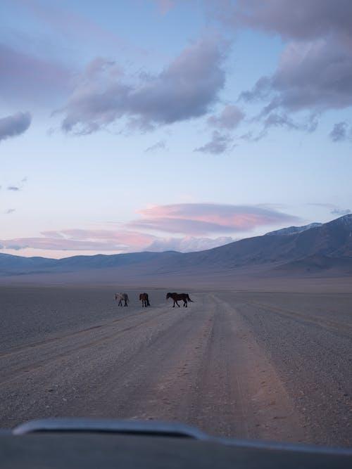 Mammal animals crossing road in prairie under cloudy sky