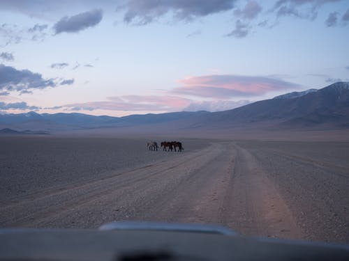 View from inside of car of domestic horses passing road and picturesque mountains under cloudy sky at sundown in countryside