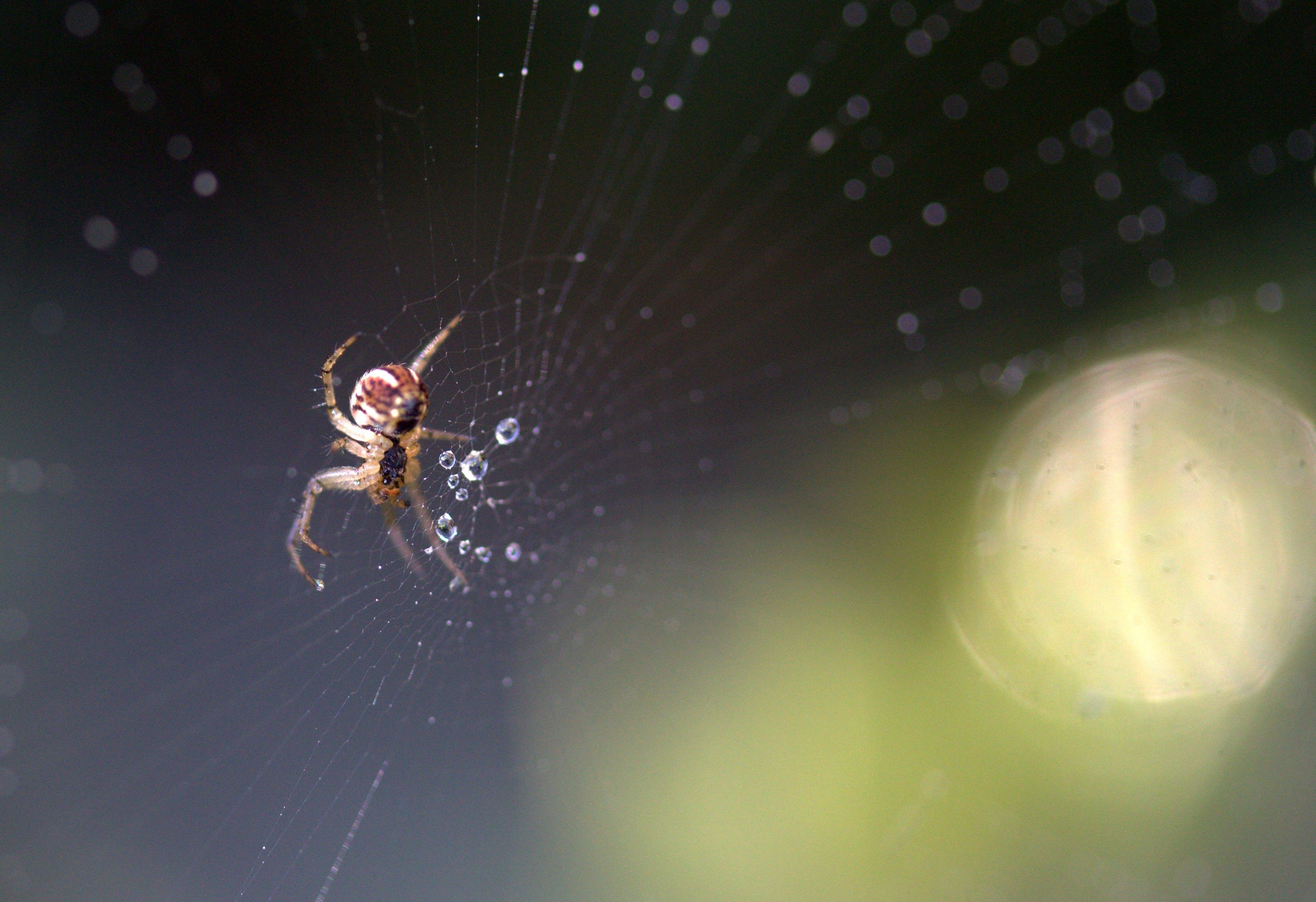 Photos gratuites de araignée, brouiller, eau, faune